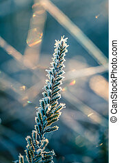 A beautiful closeup of a small heather with an ice crystals. Small swamp plant in the frozen morning light. Shallow depth of field.