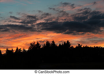 beautiful colorful sunset sky over black forest pine trees