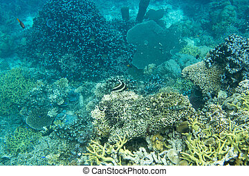 Beautiful coral reef in Indonesia