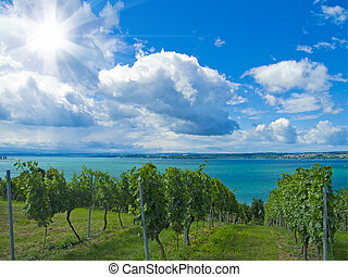 a beautiful downhill vineyard by the lake constance