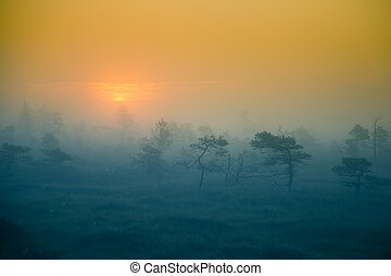 A beautiful, dreamy morning scenery of sun rising in a misty swamp.