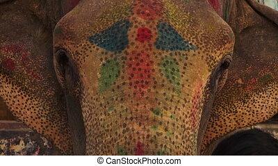 A beautiful elephant's face - A close up shot of an...