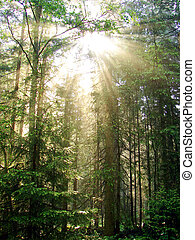 forest - a beautiful explosion of light from the sun deep in...