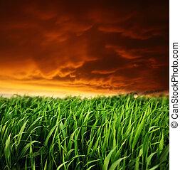 A beautiful field of green grass. Dark ominous clouds.
