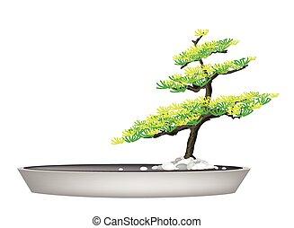 A Beautiful Fir Tree in Flower Pots