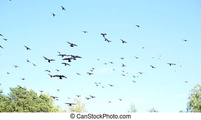 a beautiful flock of pigeons circling in the sky