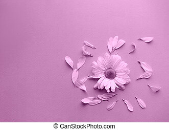 A beautiful flower on the pink background.