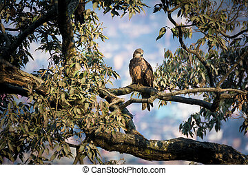 A beautiful golden eagle sitting on a tree in fall
