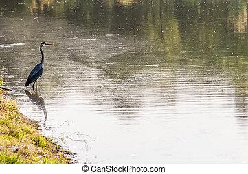 A beautiful Grey Heron (Ardea Cinerea) sitting on the edge of a