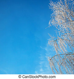 A beautiful hoarfrost on the branches