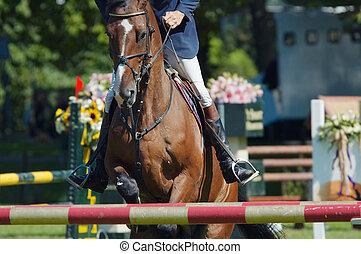 horse jumping - A beautiful horse jumping
