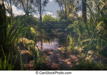 A beautiful landscape scene at a small river in the park