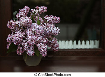 beautiful lilac flowers lilac