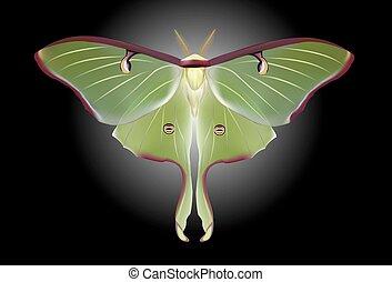 A beautiful Luna Moth (Actias luna)