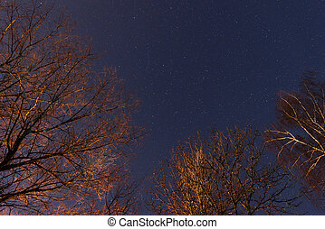 beautiful night sky, the Milky Way and the trees
