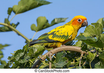 A beautiful parrot on a branch