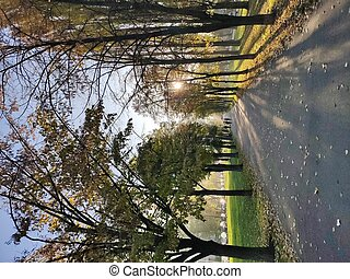 beautiful path on the boulevard with the setting sun in autumn