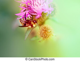 A beautiful photo of a bumblebee on a red flower