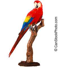 A beautiful picture of a colorful parrot