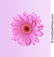 a beautiful pink flower