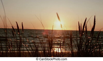 A beautiful pink sunset at sea with grass stems swaying in the wind in the front view