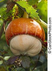 a beautiful pumpkin