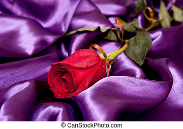 a beautiful rose with droplets on the purple satin