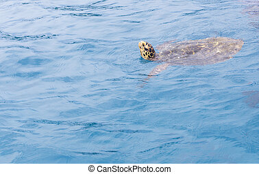 A beautiful sea turtle
