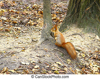squirrel on the ground near a tree