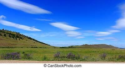 summer landscape of the steppe