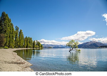 A beautiful sunny weather with The Wanaka Tree, Lake Wanaka, Wanaka, Otago, New Zealand