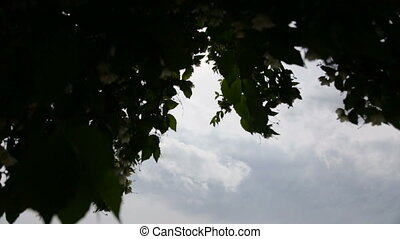 A beautiful tree with spring-green life foliage basking in...