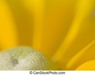 A Beautiful Yellow Daisy - A macro shot of a beautiful ...