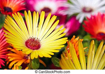 A beautiful yellow daisy flower on blurry backround