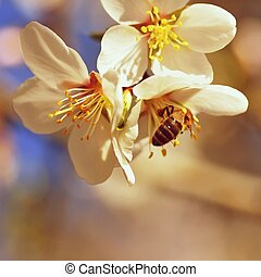 A beautifully blooming tree with a bee collecting nectar. Sunny spring day in nature. Macro shot with colorful, natural and blurred backgrounds.