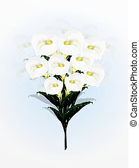A Beautifully Calla Lilies Flower in Bouquet, A Simple and...