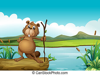 A beaver at the river