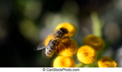 A bee collects pollen