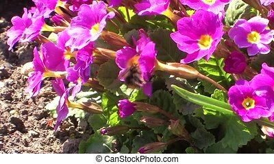 A bee on the flowers