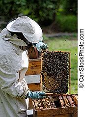 beekeeper - a beekeeper at work