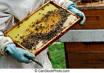 a beekeeper at work