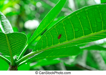 A beetle crawls on a large green leaf in the jungle