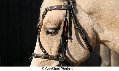 A beige horse close up