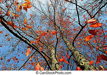 a, beleza, de, outono