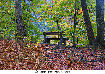 A bench in an autumn forest
