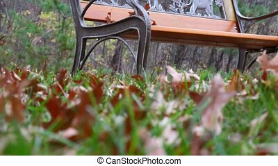 A bench in Autumn