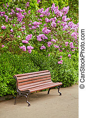 A bench under the lilac tree