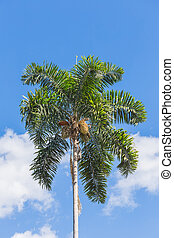 a, betel, palm, på, den, blå, sky.