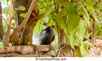 a big black crow sitting on a wooden fence