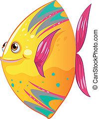 A big colorful fish